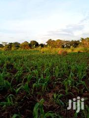 50x100ft Plot For Sale In Kira | Land & Plots For Sale for sale in Central Region, Kampala