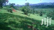 10 Acres Of Titled Land For Sale In Mukunyu, Kyenjojo, Uganda | Land & Plots For Sale for sale in Western Region, Kyenjojo